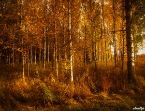 Autumn Glow III