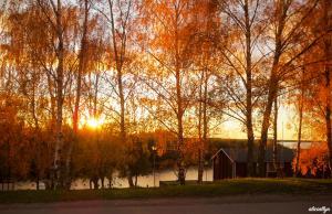 Autumn Glow I