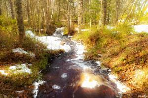 Springflow I